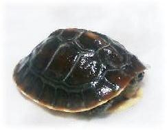 20060414-1.jpg